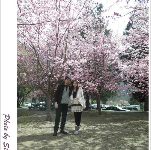 ♥遊記♥武陵農場花爭艷,人比花嬌(噗>//////