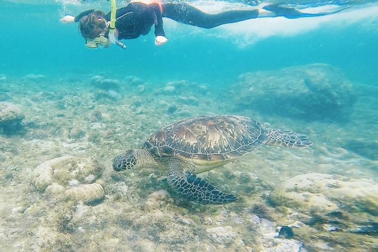 【宿霧杜馬蓋地】阿波島海龜保證班,跟海龜近距離一起游泳好夢幻療癒呀!