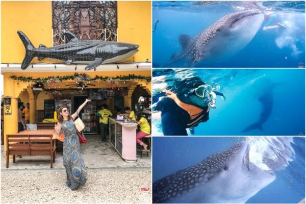 【菲律賓宿霧】此生必去歐斯陸Oslob鯨鯊村,近距離鯨鯊共游注意事項分享
